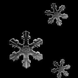 JofiaDevoe-snowflakes-white-sh_499983.th.png