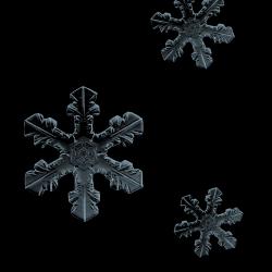 JofiaDevoe-snowflakes.th.png