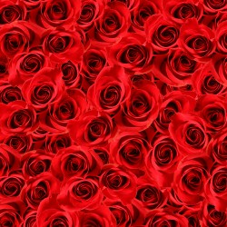 Valentine-11.th.jpg