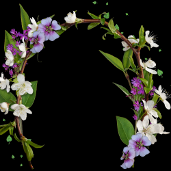 Carena-Sweet-Love-of-Spring-Cluster-6.th.png