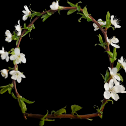 Carena_Sweet-Love-of-Spring_19.th.png