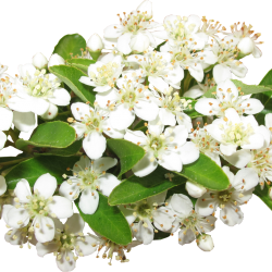 Carena_Sweet-Love-of-Spring_27.th.png