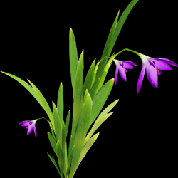 Carena_Sweet-Love-of-Spring_41.th.png