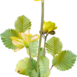 Carena_Sweet-Love-of-Spring_46.th.png