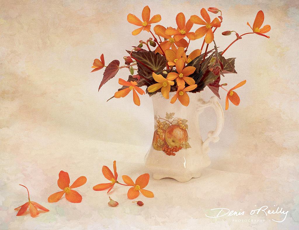 Orange-Begonia.jpg