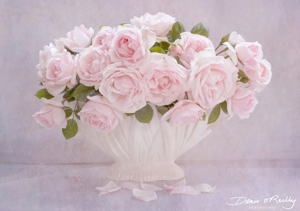 Rosa-New-Dawn.jpg