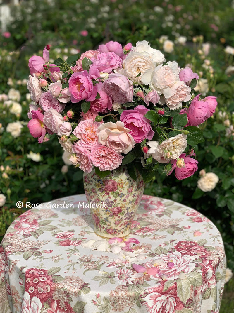 austin-roses.jpg